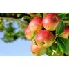 Портал растениеводства,  животноводства и прочих видов аграрной промышленности